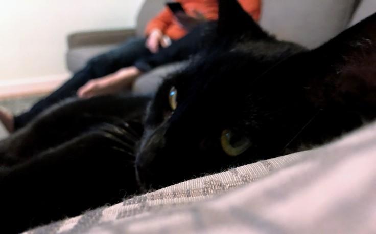 Black cat, Shadow, relaxing