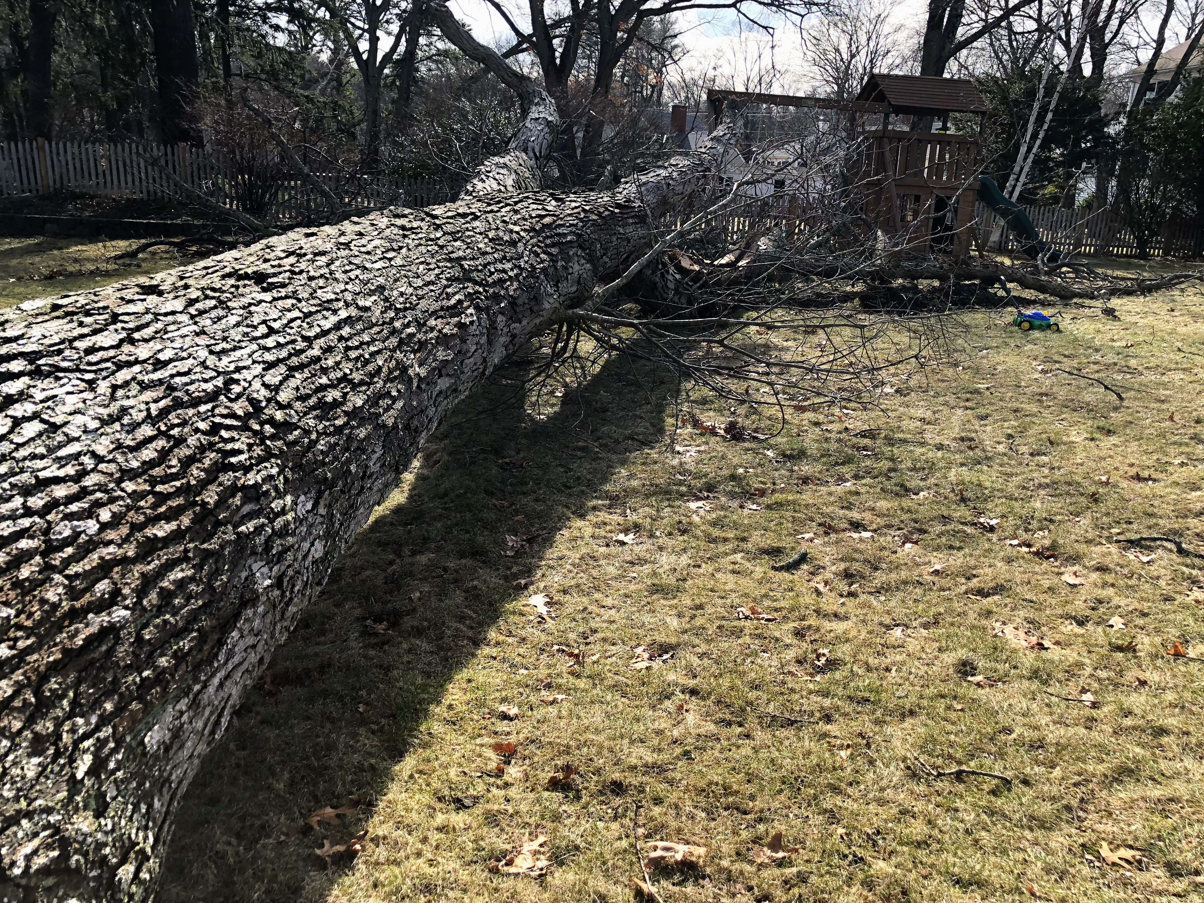 fallen oak tree into swing set